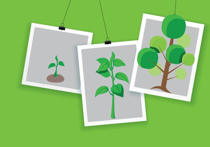 crescita-alberi