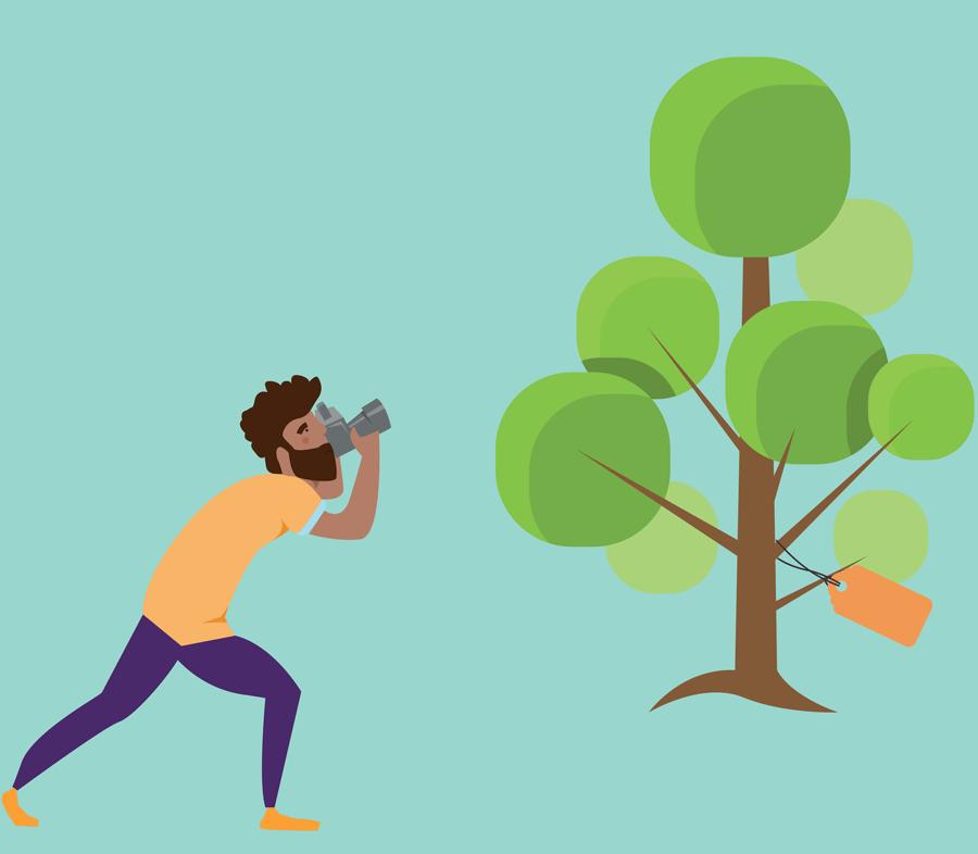 foto-albero